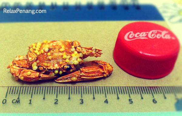 Mini Crab Size - RelaxPenang