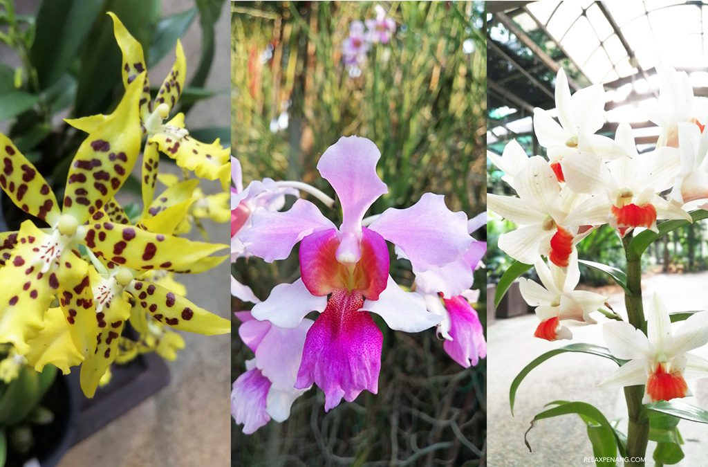 Kuala Lumpur Orchid Garden with Flowery Jogging Track