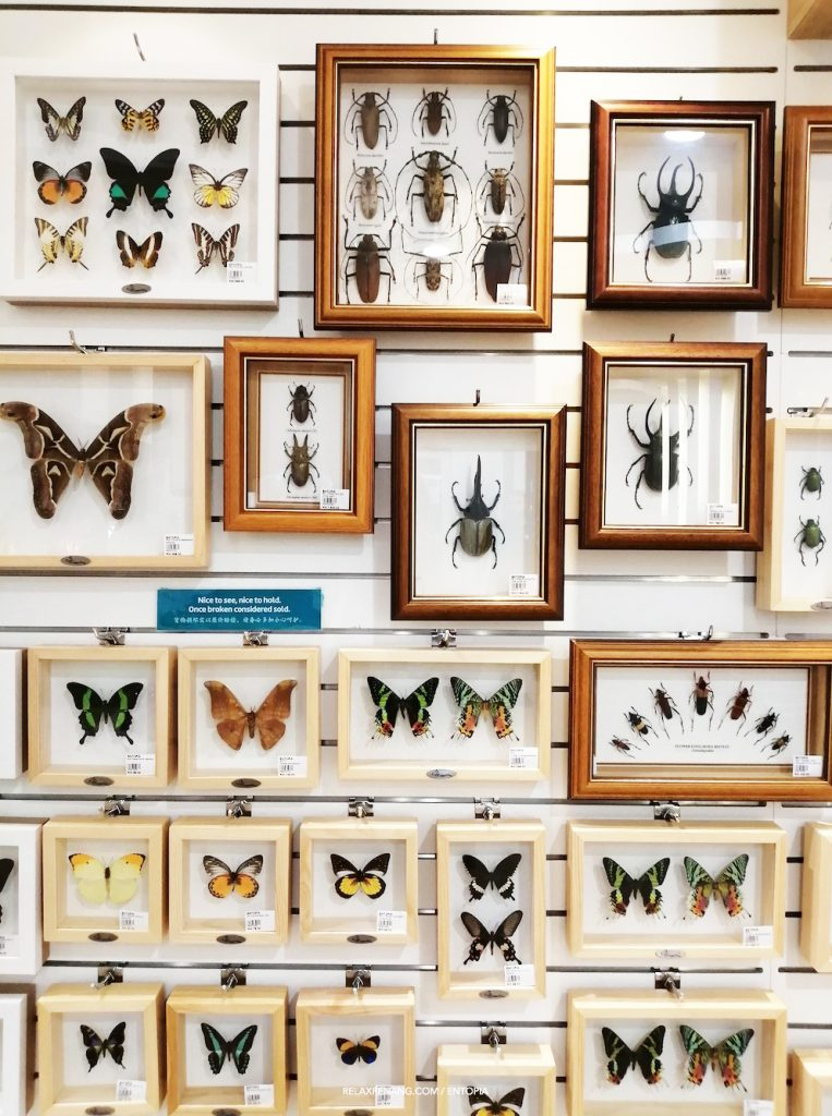 Entopia Souvenir Shop Butterfly and Insects Specimens
